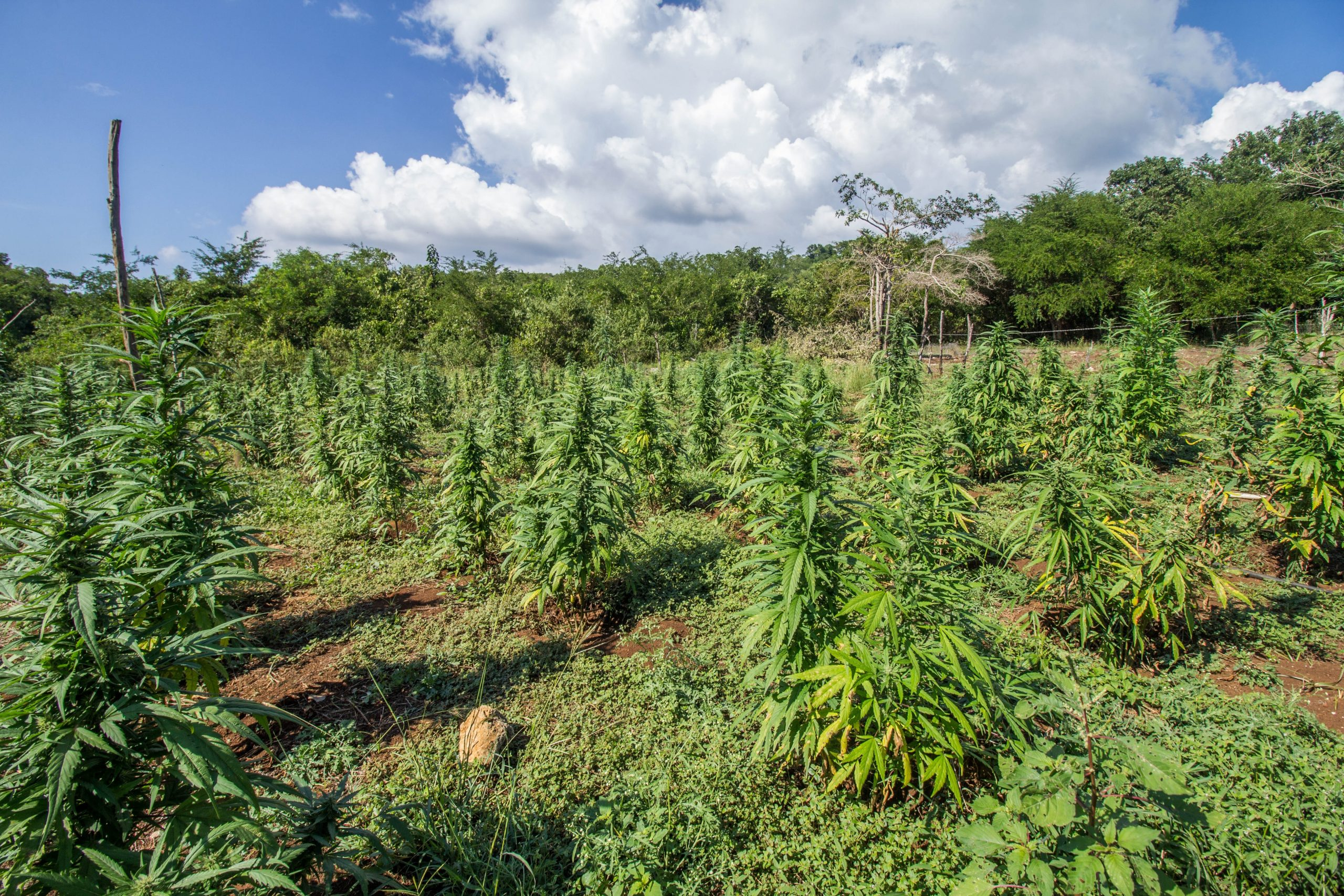 French startup plans to make energy from hemp biomass