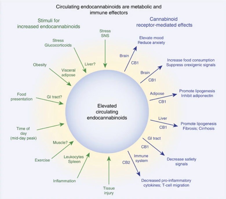Schematic representing the sources and targets of the endocannabinoid system. 7.