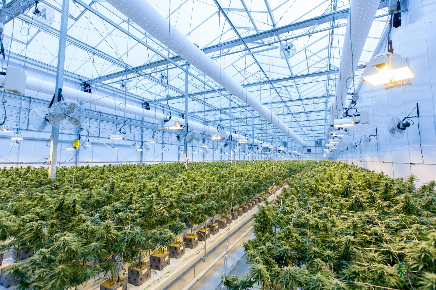 Jersey Start-Up Granted Second Ever UK License to Cultivate Cannabis